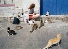 Явление котов народу