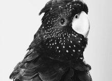 Черный цвет: любовь и ненависть